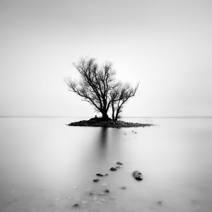 lonely tree on small island, #2