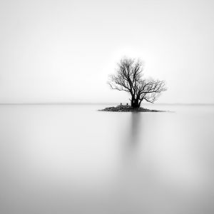 lonely tree on small island, #1