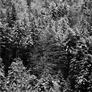 wintery forest, #1
