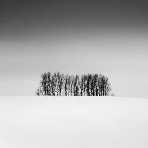 zen trees, study #1