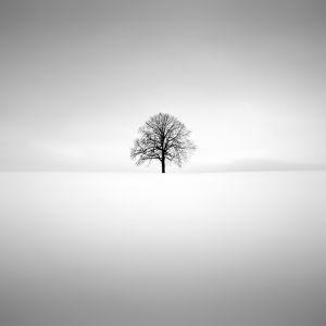 zen trees, study #3