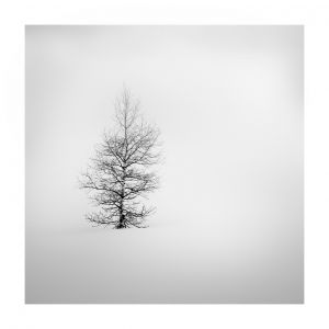 Birke im Nebel, Turrahus #Win8