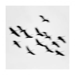 13 birds, Rügen, #2
