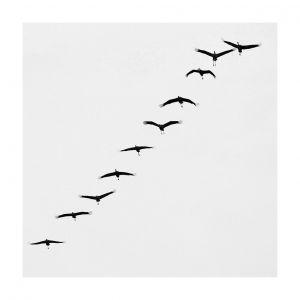 10 birds, Rügen, #1